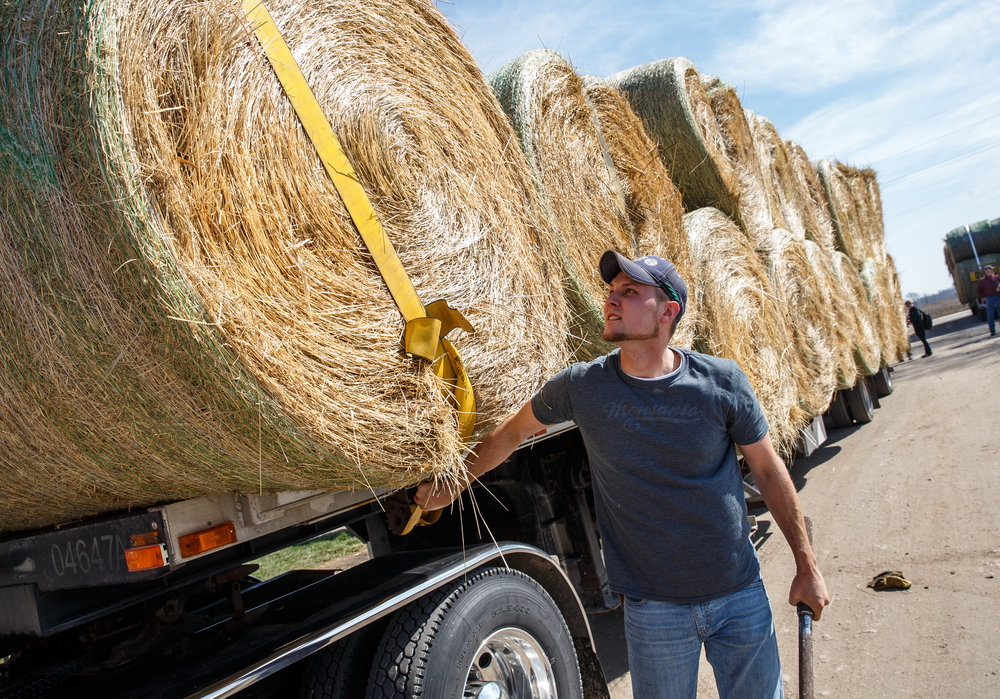 Adam Cully, Pisgah, Ill, checks the tie-down straps for a load a hay on the truck he will be driving with a convoy of supplies organized by the Cass-Morgan Farm Bureau Young Leaders for a wildfire relief donation drive at Jackson Farms, Friday, March 24, 2017, in Jacksonville, Ill. The hay and supplies donated from around central Illinois is being taken by convoy to aid the Kansas livestock farms devastated by wildfires. [Justin L. Fowler/The State Journal-Register]