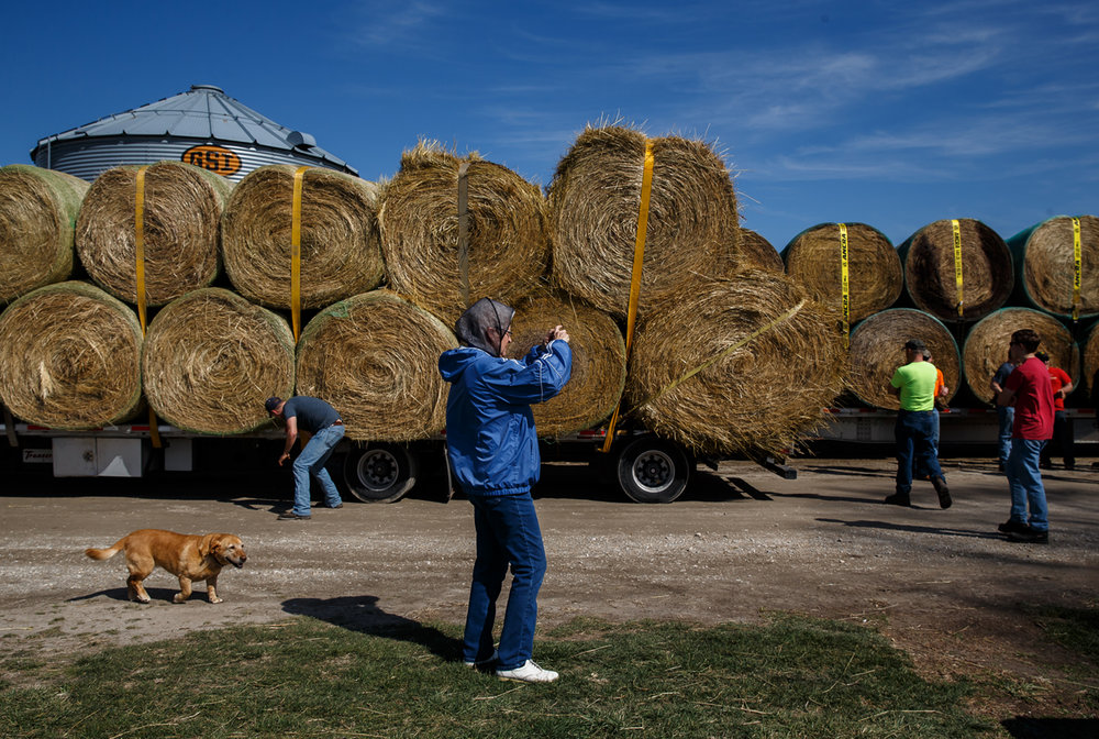 Carolyn Jackson, center, with the family dog Lilly following along, snaps a photo as volunters and members of the Cass-Morgan Farm Bureau Young Leaders load hay on trucks for a wildfire relief donation drive at Jackson Farms, Friday, March 24, 2017, in Jacksonville, Ill. The hay and supplies donated from around central Illinois is being taken by convoy to aid the Kansas livestock farms devastated by wildfires. [Justin L. Fowler/The State Journal-Register]