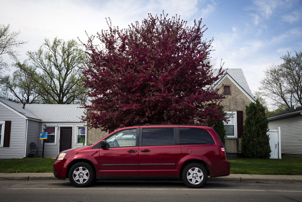 A red flowering crab tree in a yard on East Laurel Street Tuesday, April 10, 2017. [Rich Saal/The State Journal-Register]