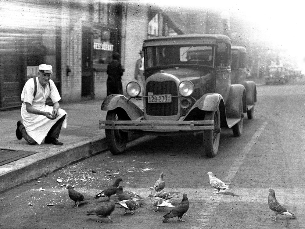 Man feeding pigeons. Illinois State Journal/Register glass plate negative/Sangamon Valley Collection at Lincoln Library  C-98-130  neg# 1669   VF2007-243