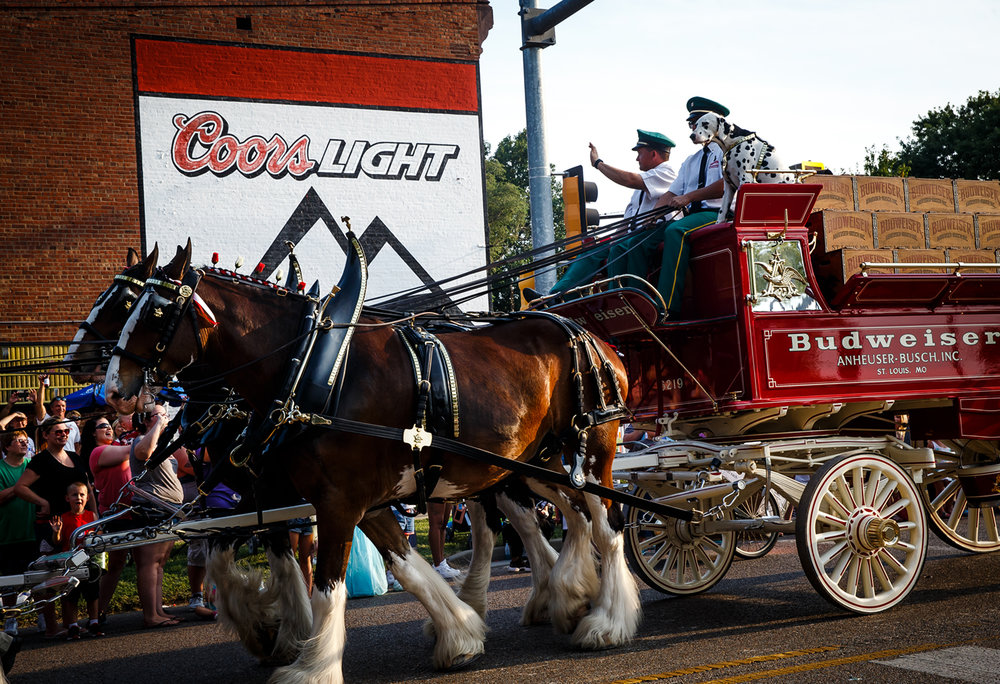 Barley the Budweiser Hitch Dog rides along with the Budweiser Clydesdales as they pass by Franny's Irish Pub during Illinois State Fair Twilight Parade along Sangamon Avenue, Thursday, Aug. 10, 2017, in Springfield, Ill. [Justin L. Fowler/The State Journal-Register]