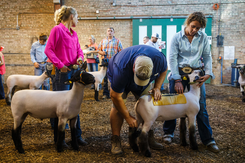 Hanna Runner gets a last bit of grooming help before showing her sheep in the Parade of Champions at the Illinois State Fairgrounds, Saturday, Aug. 12, 2017, in Springfield, Ill. [Justin L. Fowler/The State Journal-Register]