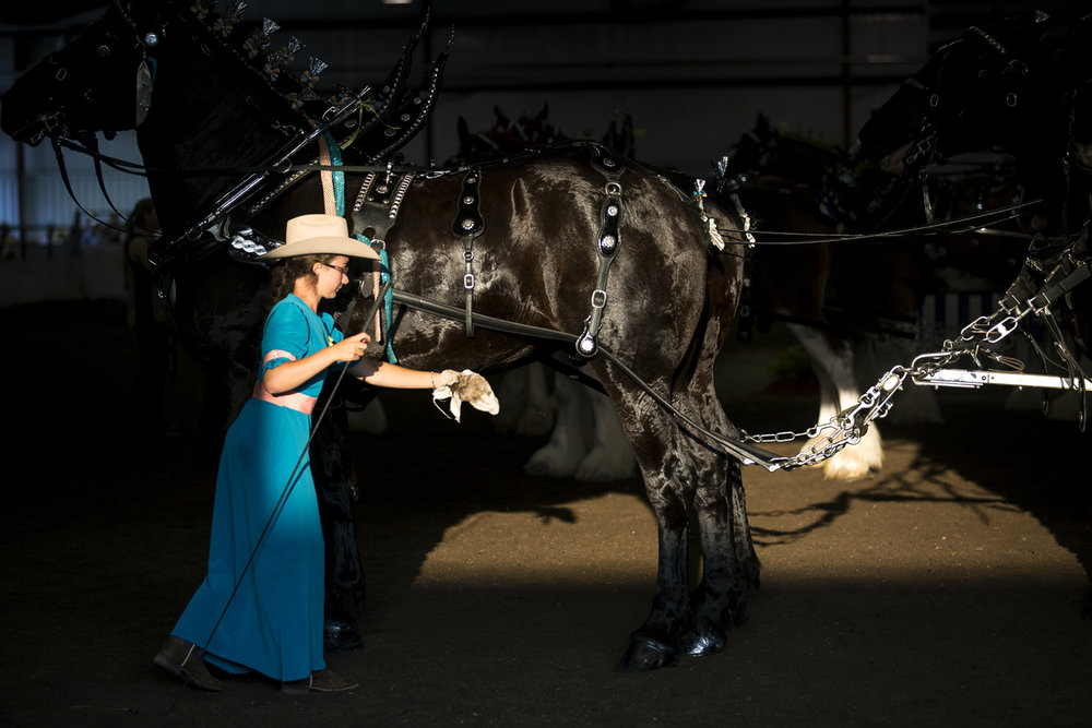 Sue Etta Yoder wipes down one of the Percheron draft horses in her family's six mare hitch at the Illinois State Fair Monday, Aug. 14, 2017. [Rich Saal/The State Journal-Register]