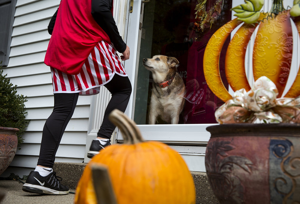 Before heading out to go trick or treating, Andy Antonacci steps to the door of his house on South Glenwood Avenue where his dog, Sage, greets him Tuesday, Oct. 31, 2017. [Rich Saal/The State Journal-Register]