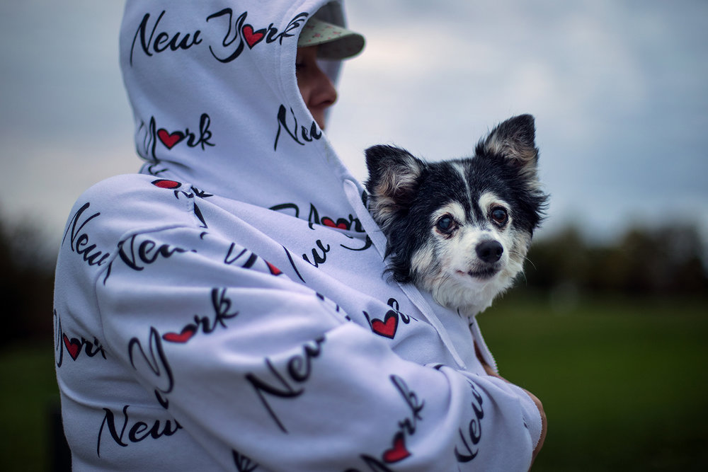 Beethoven, a 16-year-old long-haired chihuahua, is bundled up close to the body of his owner, Faith Wright, during an evening walk Monday, Oct. 23, 2017. Beethoven may need to break out his own coat as temperatures aren't expected to break the 50 degree mark Tuesday. [Ted Schurter/The State Journal-Register]