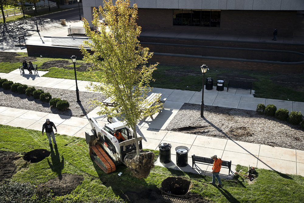 Nine new maple trees were planted by a crew from Paul Tree Farm Thursday, Oct. 26, 2017 in the plaza between Lincoln Library and the municipal parking garage on Capitol Avenue, the last round of a year-long replanting program. The seedless, fast-growing Autumn Blaze variety will reach 40-60 feet when mature and are known for their brilliant red fall color, according to Jeff Reim, the city arborist. Numerous diseased trees, including dozens of ash trees, were removed this year, Reim said. The remaining 24 trees going in this fall will bring the total to 109 new ones this year in the downtown area. [Rich Saal/The State Journal-Register]
