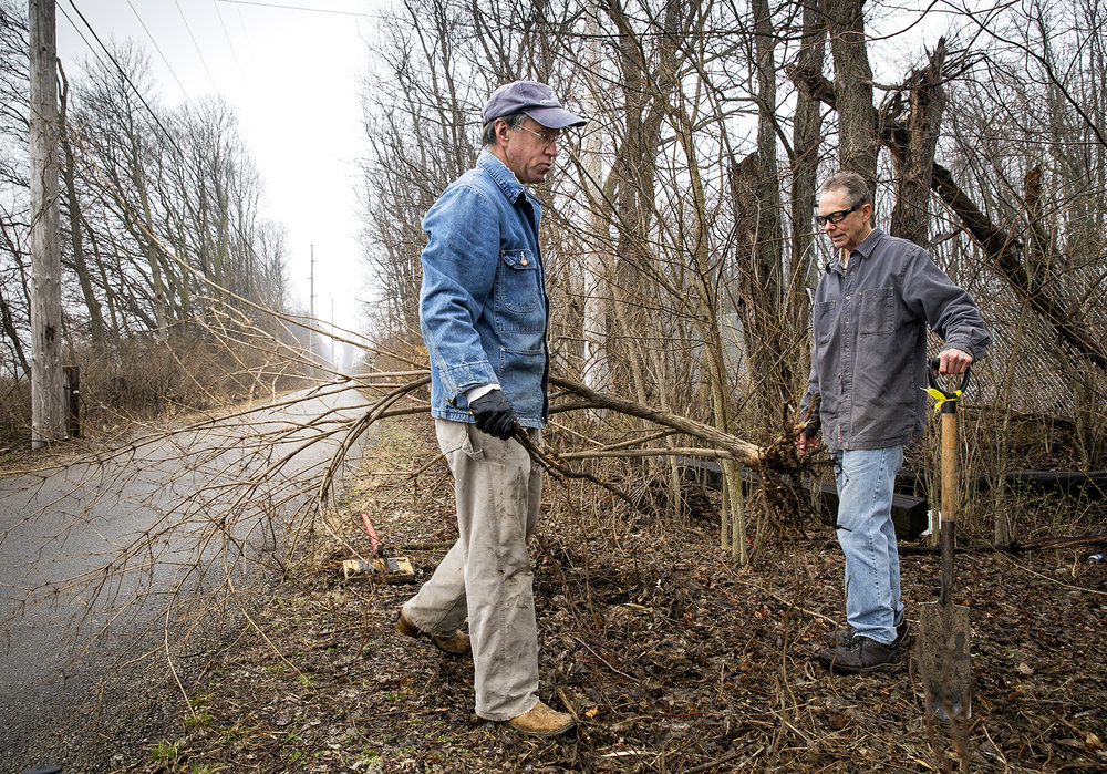 Greg Feeny, left, and Joel Johnson pull honeysuckle bushes up by the root from along the Interurban bike trail near Woodside Road Wednesday, March 28, 2018  in Springfield, Ill. The pair volunteer their time to remove invasive species and keep overgrown brush in check. [Rich Saal/The State Journal-Register]