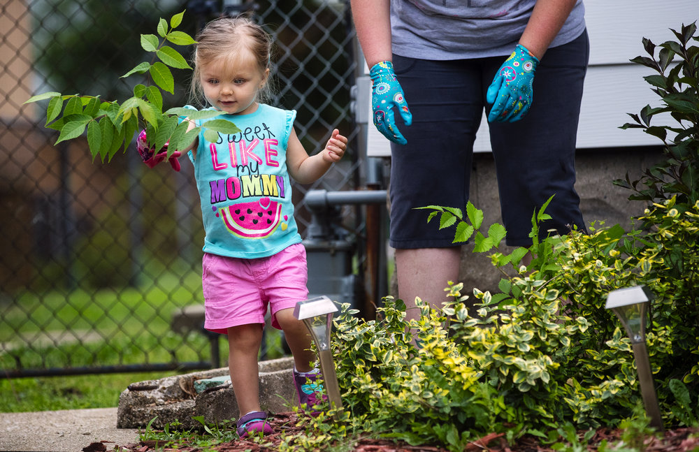 Two-year-old Everly Graun helps her mom Cassie pull weeds in the front yard of their Springfield home Monday, May 31, 2018. Graun said her daughter is an avid outdoors fan, even preferring to eat outdoors. [Ted Schurter/The State Journal-Register]