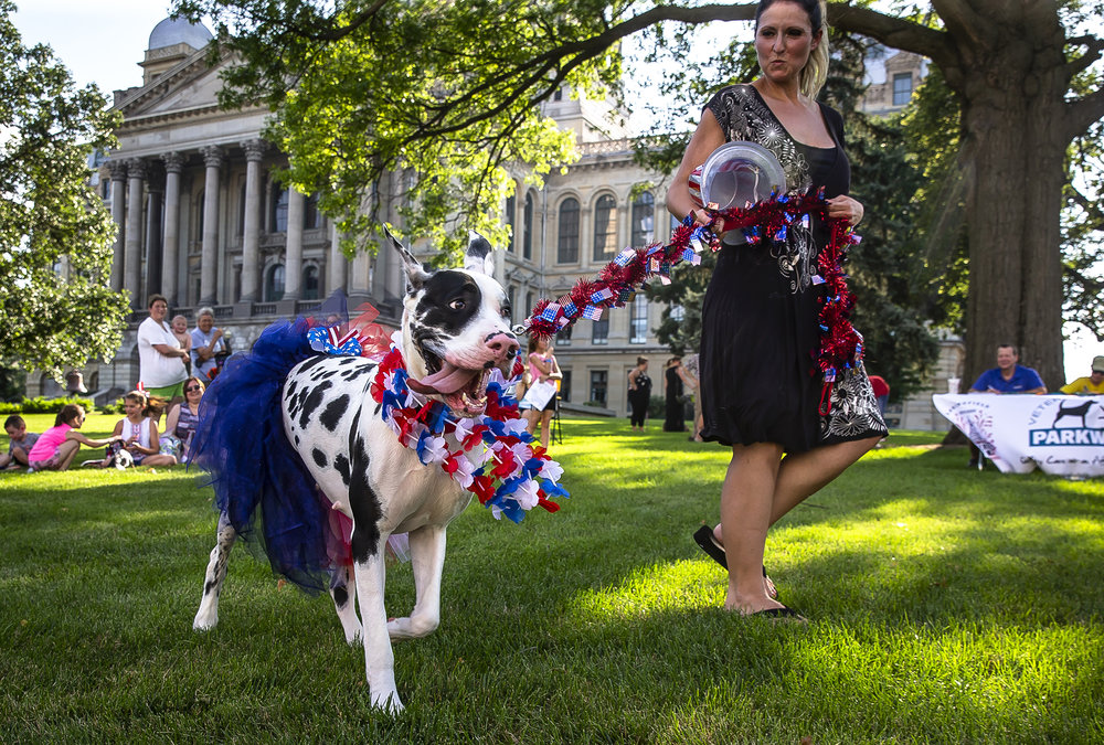Mazzie, a harlequin Great Dane, shows off her July 4th spirit with owner, Stephanie Wilkinson, of Chatham, Ill., in the Springfield Jaycees Dog Pageant Presented by Parkway Vet Clinic during the Capitol City Celebration at the Illinois State Capitol, Saturday, June 30, 2018, in Springfield, Ill. [Justin L. Fowler/The State Journal-Register]