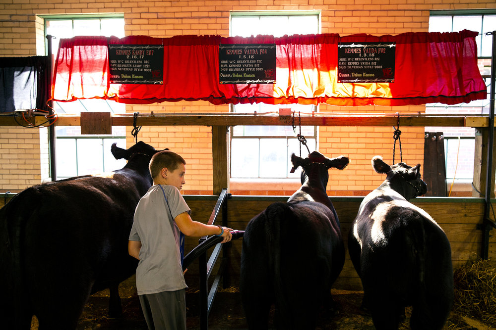 Deken Kemme grooms his Simmental heifers at the Illinois State Fair Thursday, Aug. 9, 2018 on the Illinois State Fairgrounds in Springfield, Ill. [Rich Saal/The State Journal-Register]