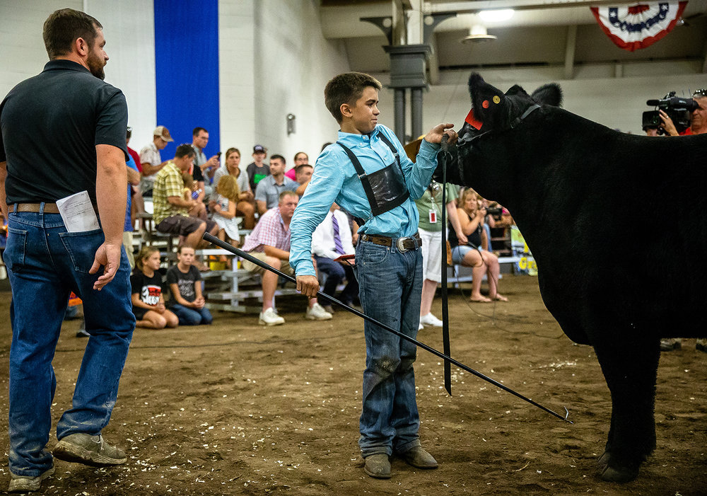 "Adam Miller, keeps his Crossbred named ""Taco"" in place after winning Grand Champion steer during the Parade of Champions at the Livestock Center during the Illinois State Fair at the Illinois State Fairgrounds, Saturday, Aug. 11, 2018, in Springfield, Ill. [Justin L. Fowler/The State Journal-Register]"
