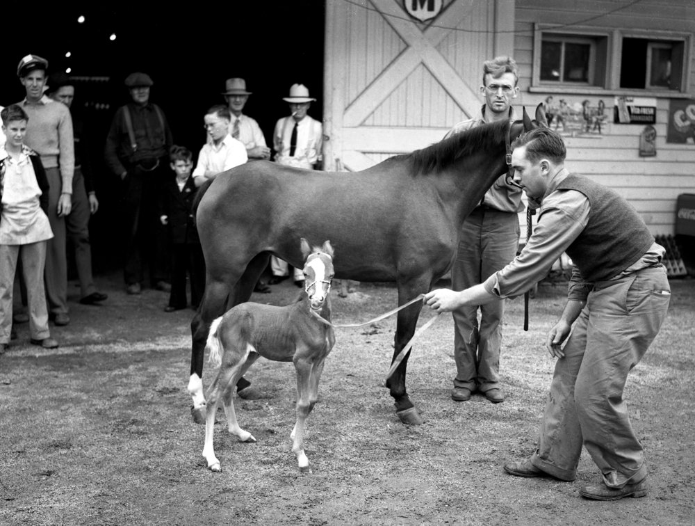 Illinois State Fair, horse, hackney pony, August 18, 1939. Pub. ISJ Aug. 19, 1939, P. 4. File/The State Journal-Register 
