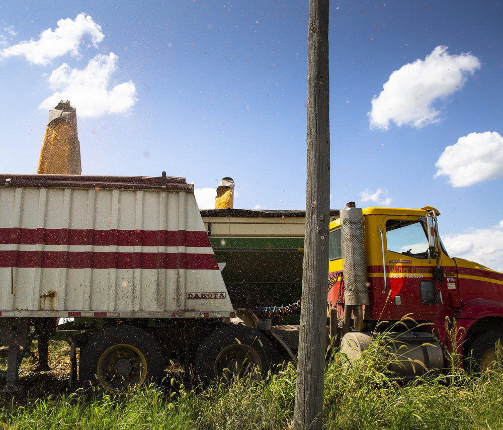On Van Bitner's farm in Mason County, corn transfers from his combine to a grain truck Wednesday, Sept. 5, 2018 near Mason City, Ill. [Rich Saal/The State Journal-Register]