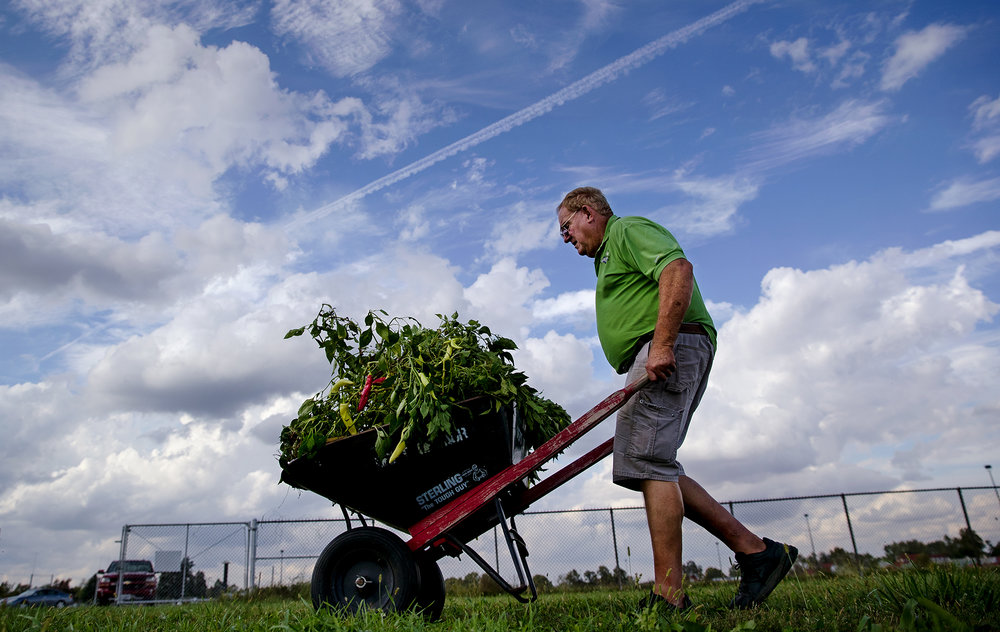 Alan McCallister pushes a load of pepper plants toward a table at the community garden plots on the infield of the Illinois State Fair track Tuesday, Oct. 9, 2018. McAllister methodically picked over the plants to gather the last of his harvest before discarding the plants on the compost pile and said he'll share the bounty with his children. [Ted Schurter/The State Journal-Register]