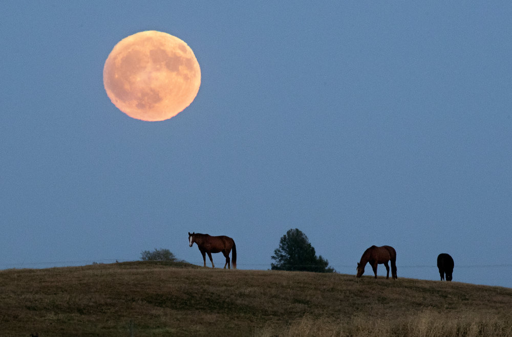 A full moon rises above a trio of horses grazing on a hill south of Edinburg Tuesday, Oct. 23, 2018. [Ted Schurter/The State Journal-Register]