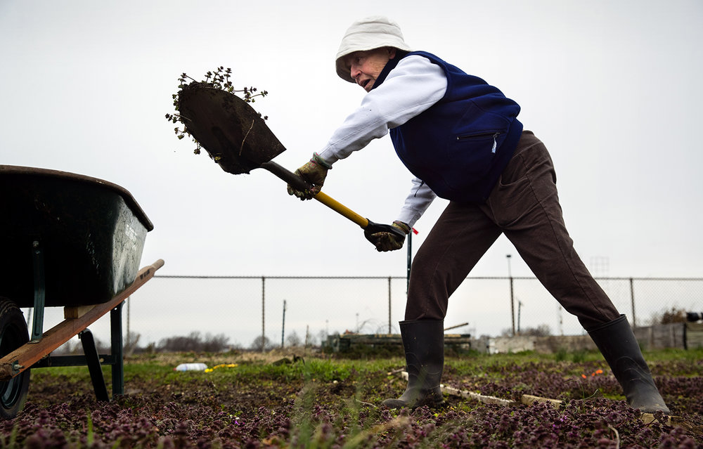 Camille Proud uses her late father's shovel to remove weeds from her garden plot at the Illinois State Fairgrounds Friday, April 6, 2018. Despite temperatures in the 30's and wet, muddy ground, Proud said she was glad to finally be out in the garden. The plots, located in the infield of the track, opened for the season March 30. [Ted Schurter/The State Journal-Register]