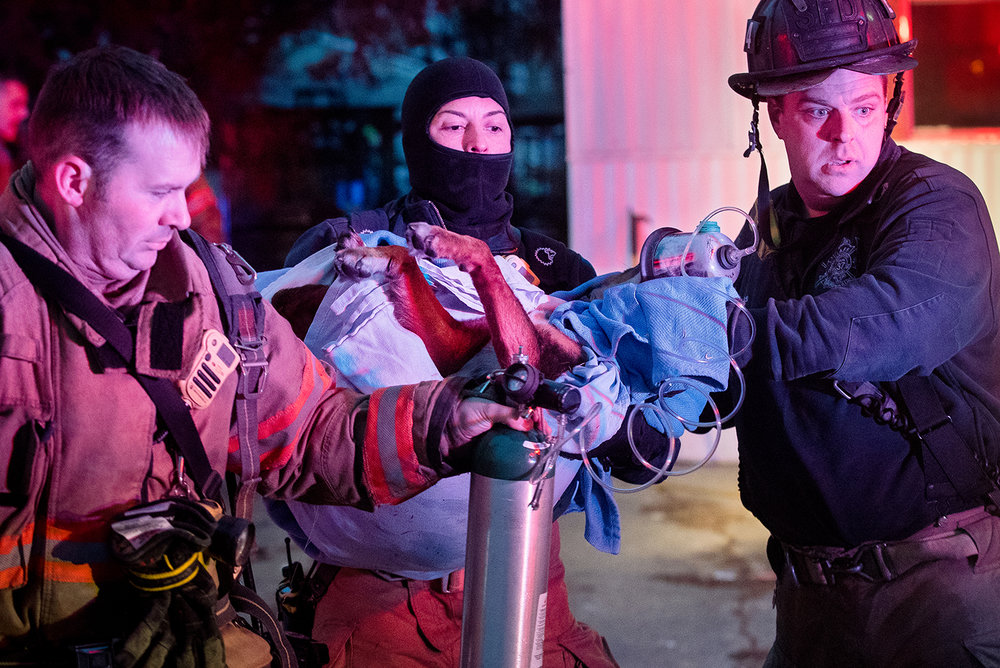 Springfield firefighters, from left, Rick Wiese, Julie Plunk and Jake Perkins carry a dog to a fire engine after giving it oxygen at the scene of a fire off Duncan Farm Road Thursday, Jan. 31, 2019. Fire officials said the dog was sick but breathing better after the oxygen. [Ted Schurter/The State Journal-Register]