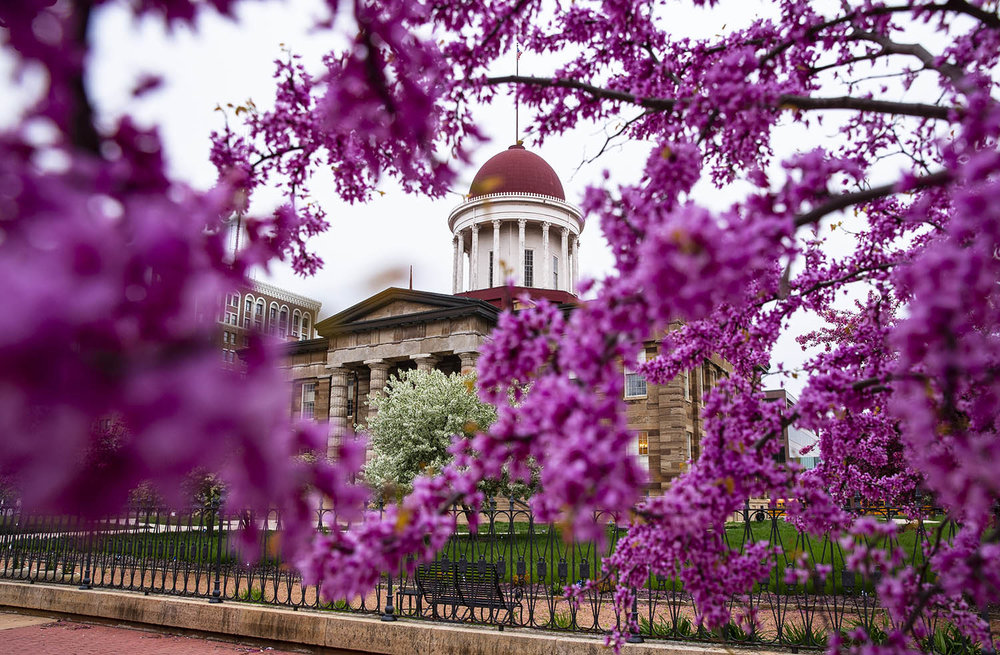 Redbud trees along the Old State Capitol Plaza join a plethora of color in and around the Old State Capitol as the spring bloom is in full effect, Tuesday, April 30, 2019, in Springfield, Ill. [Justin L. Fowler/The State Journal-Register]