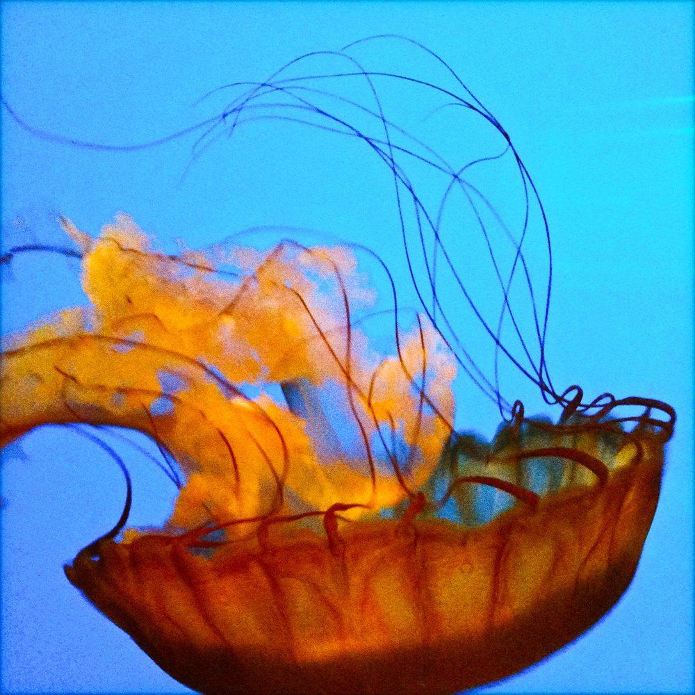 Underwater Rainbow - jelly