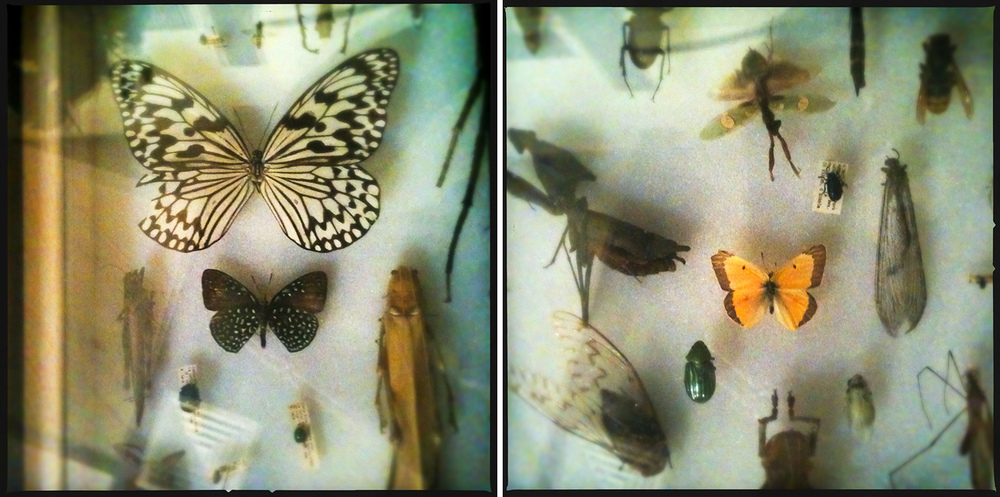 Butterfly Drawer