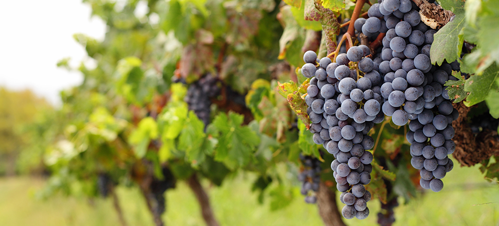 8334-2-Tour-the-Vines-of-Napa-Valley-MAIN.jpg