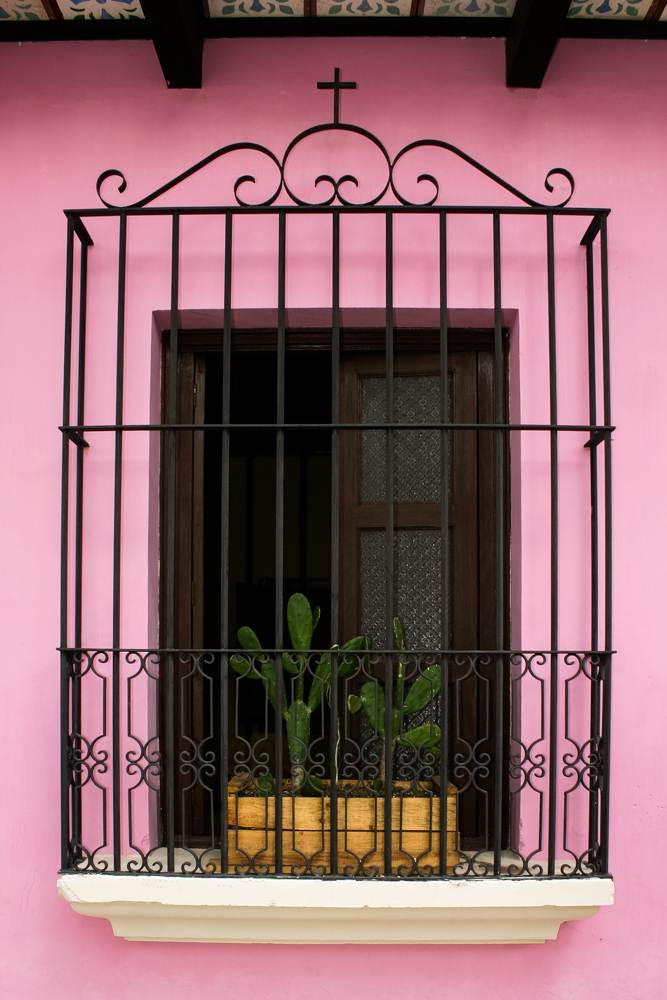 cactus-window (1 of 1).jpg