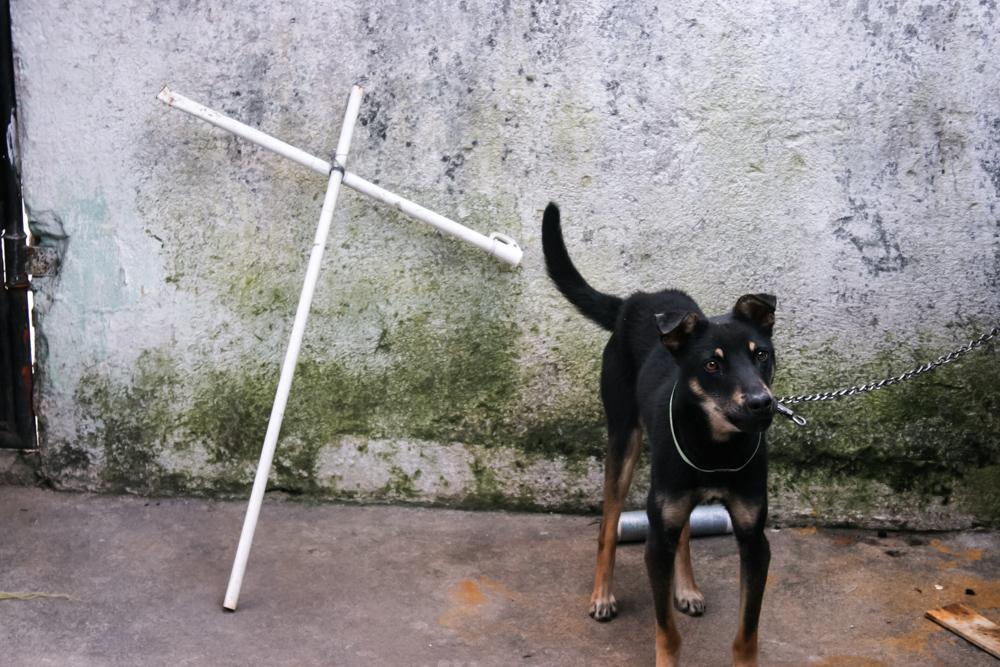 cross-dog (1 of 1).jpg