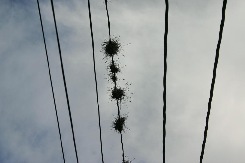 wire-plantz (1 of 1).jpg