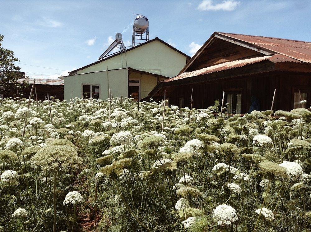 Flower farms in Da Lat, Vietnam