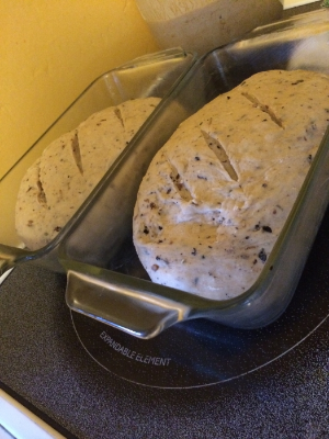 The two loaves of bread proofing away.