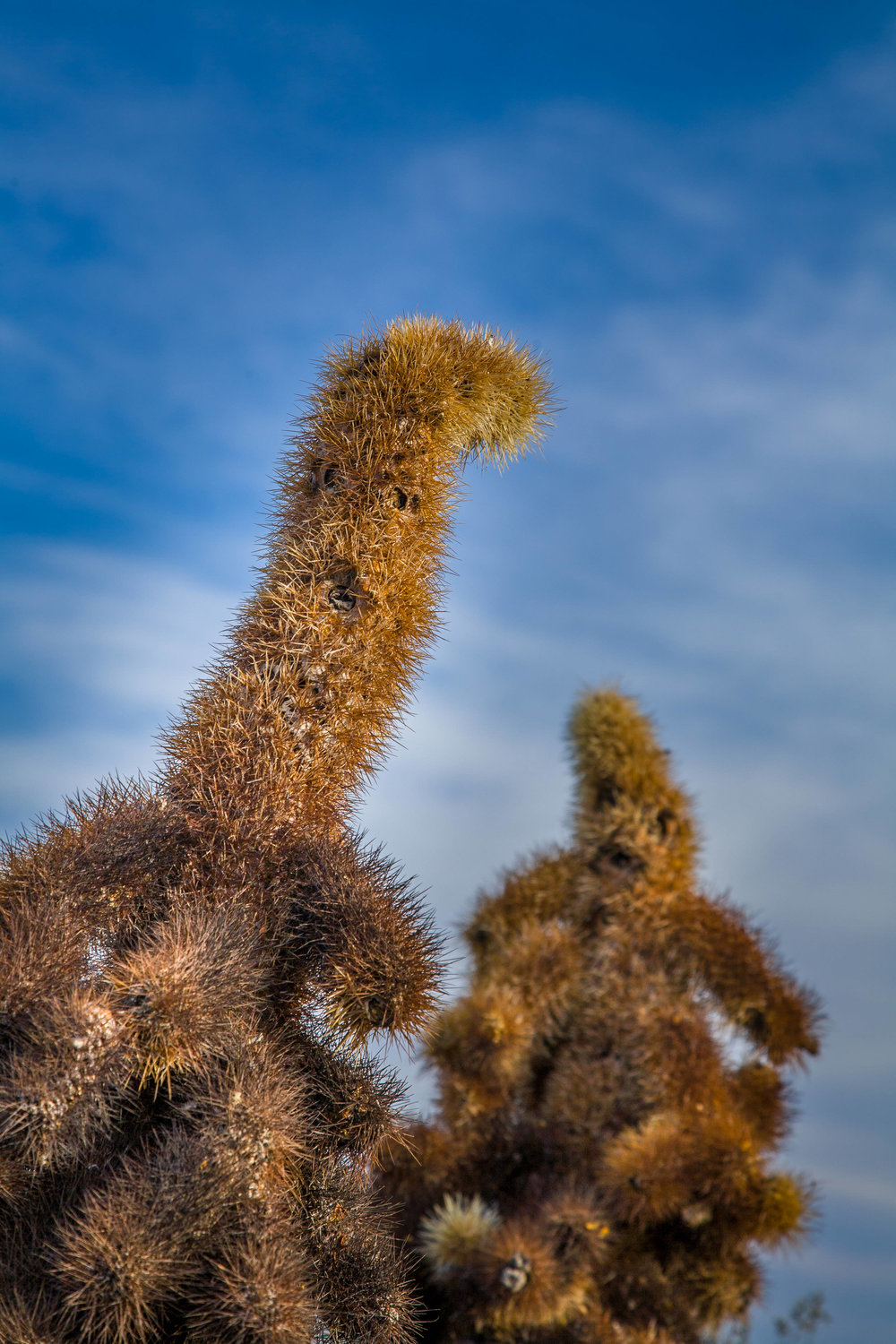 Untitled Cactus   People  2006, Joshua Tree, California. Digital Capture Signed Limited Edition of 20    ORDER OR INQUIRE