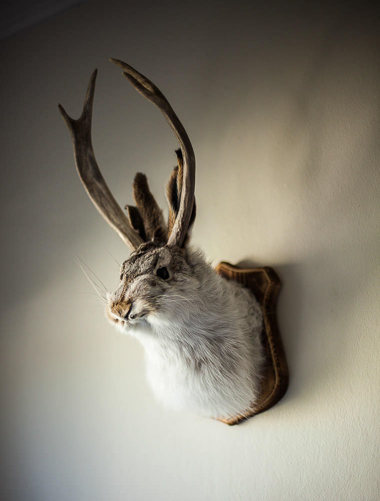 Urban Myth # 1 — Jackalope  2012 Signed Limited Edition of 20    ORDER OR INQUIRE