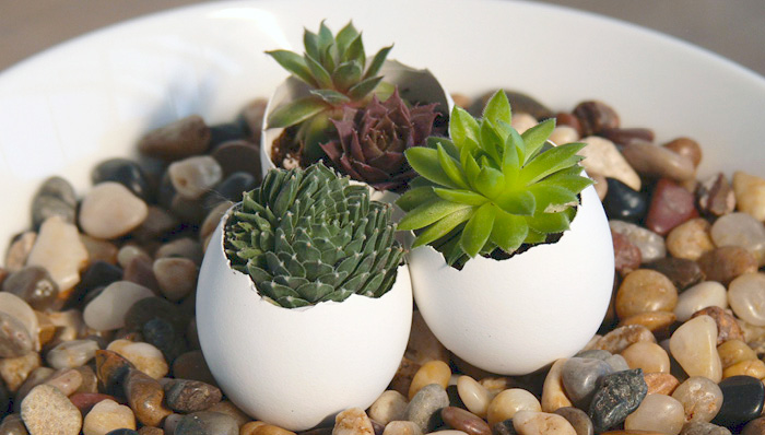 "Succulents: These are typically the easiest and cheapest to find! We love putting these in cute, little pots. They need a good amount of sunlight, mostly indirect. They may ""burn"" if in direct sunlight for too long. Succulents require a good amount of water whenever they feel dry."