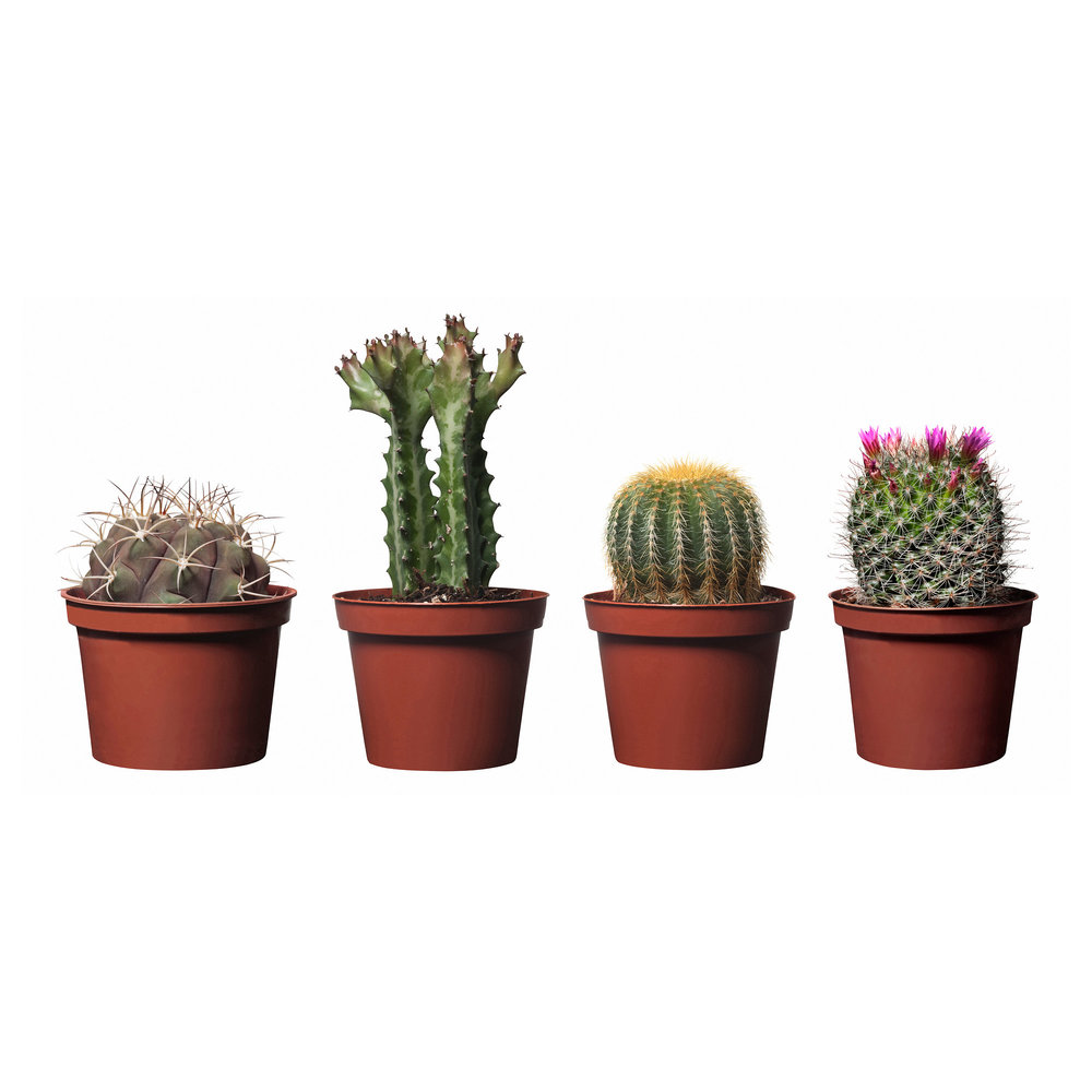 Cactus:  We also love cacti as home decor because they look so stinking cute in pots! They need lots of sun! And only need water when they are super dry. As long as you don't water cacti too much, they should be around for a awhile. :)