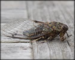 www.aspiringflyfishing.co.nz