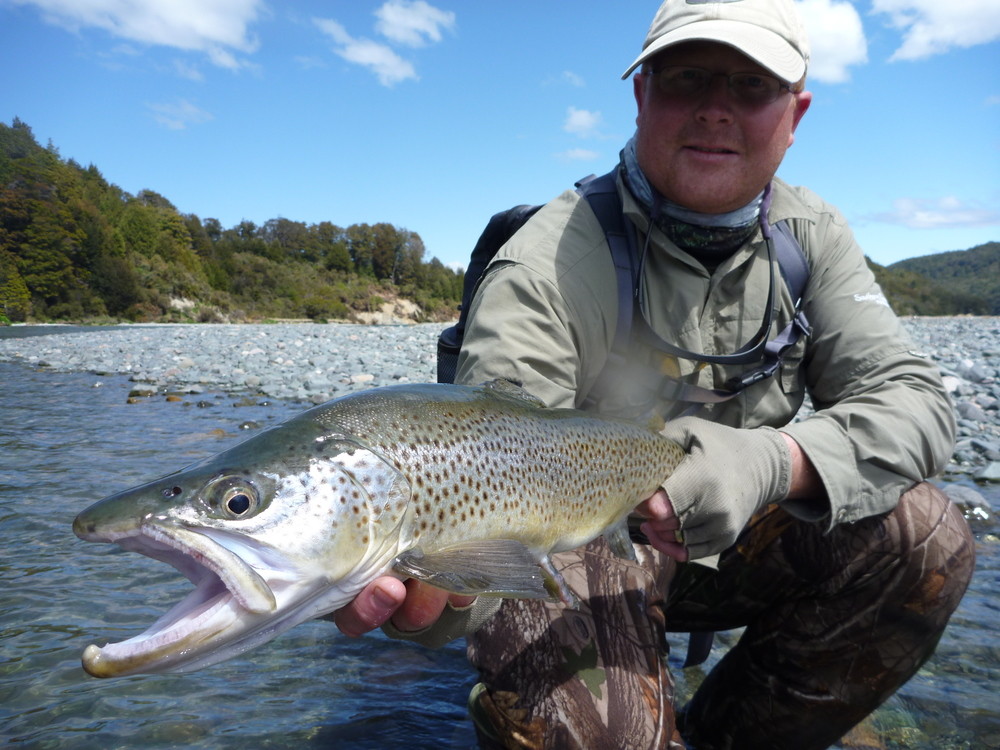 Trophy brown trout from the Haast river,South Westland region.