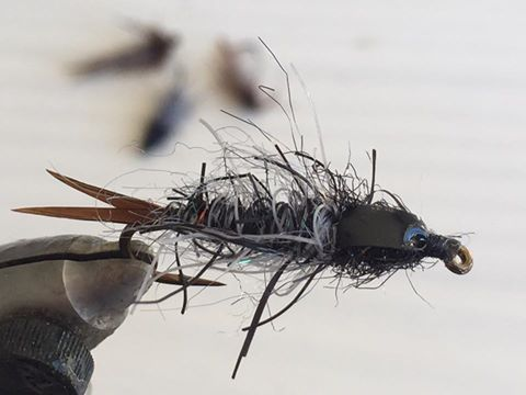dobson fly or toebiter nymph.jpg