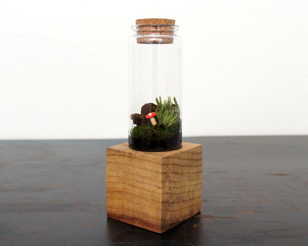 Moss + Twig Terrarium Kit