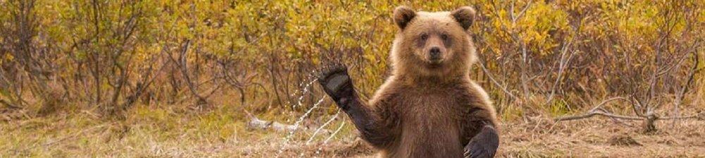 waving-bear-slider.jpg