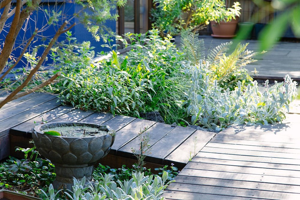 NORTHCOTE RAMBLER GARDEN  SECRET JAPANese-INSPIRED OUTDOOR LIVING