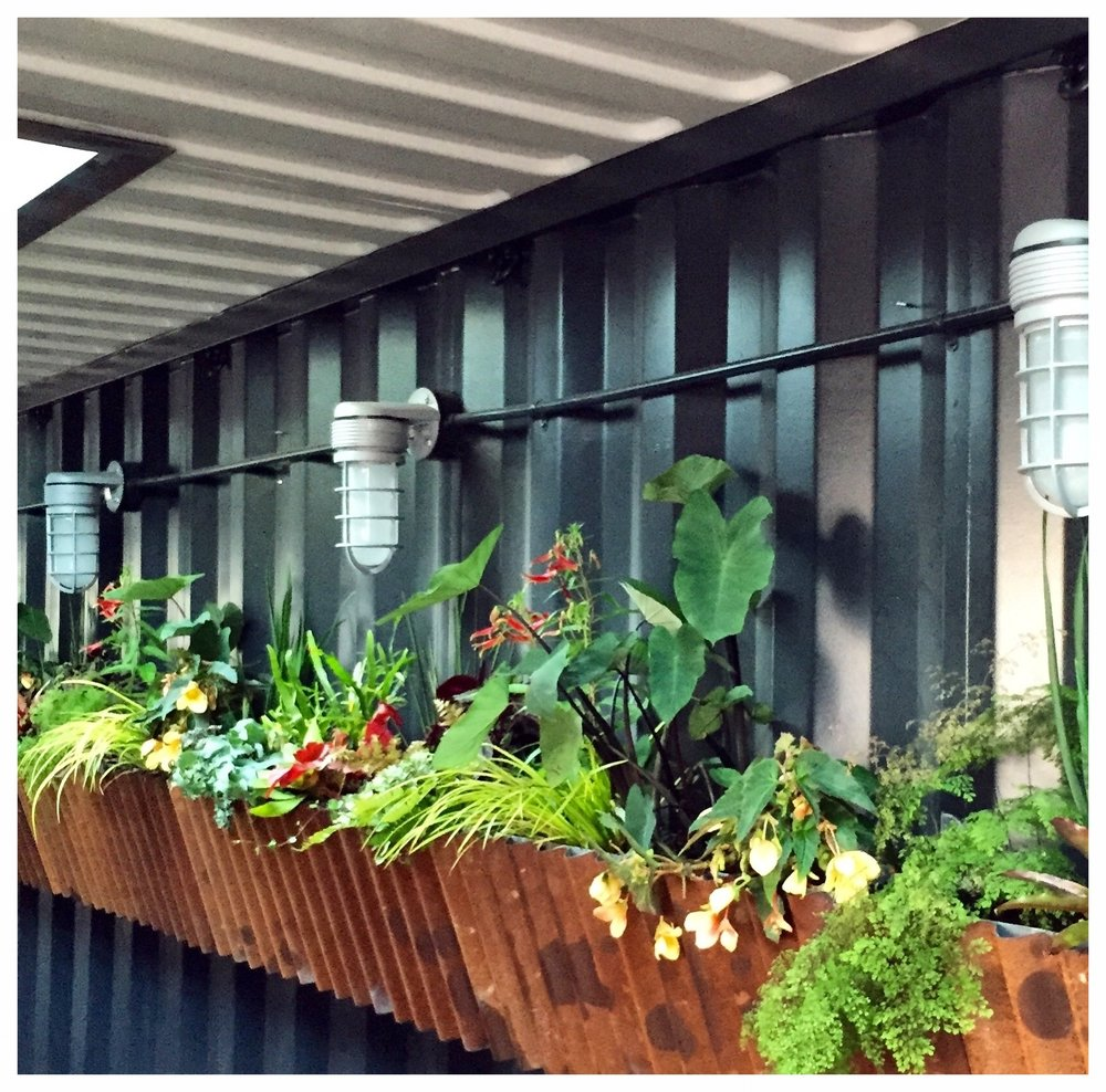 4505 Burgers & BBQ Living Wall by Collecting Flowers | San Francisco Bay Area Custom Garden Design