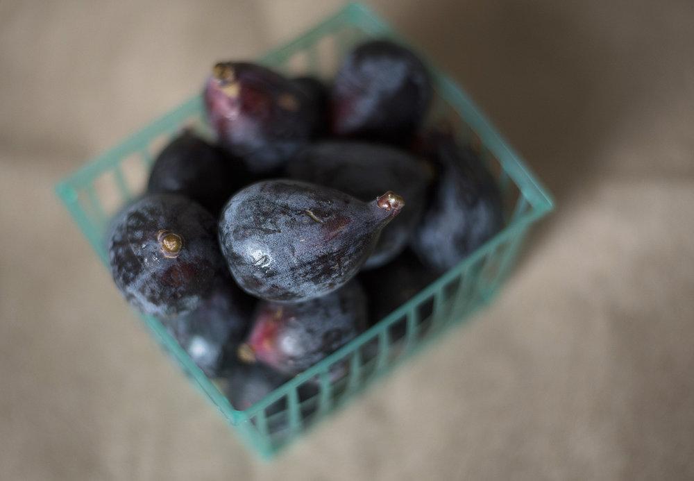 Figs005.jpg