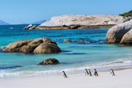 Penguins on Boulders Beach, Simons Town.