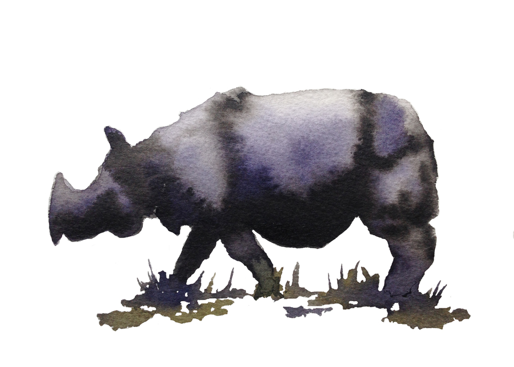 Javan Rhino ps.jpg