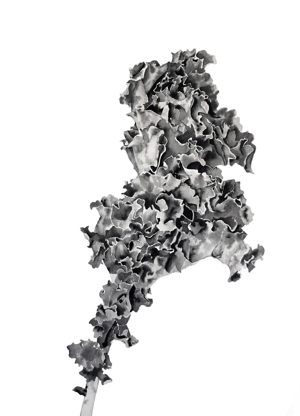 Kale 1.jpg