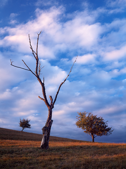 Caption: Tree Brothers, Camera: Linhof Techno, Lens: Rodenstock HR Digaron-W 5.6/90mm, Film: Fuji Velvia 50, Filters: Singh-Ray Warming Polarizer, Exposure: Unrecorded