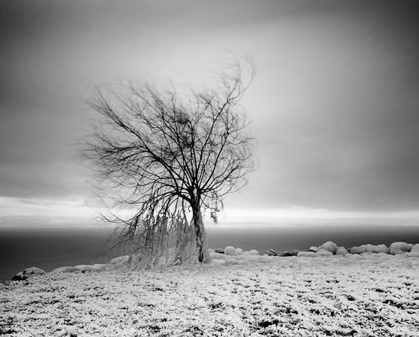 Title: Frozen Tree, Camera: Ebony RSW 45, Lens: Rodenstock 45 mm, Filtr: Lee Big Stopper and Lee ND Grad 0.3, Film: Kodak T-Max 100, Exposure: 216″, f 11
