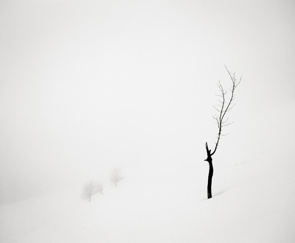 Broken Tree, France, 2013
