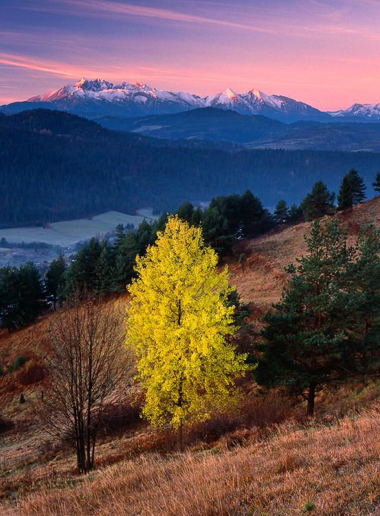 Last Day of Autumn, Lesnica, Pieniny, Slovakia