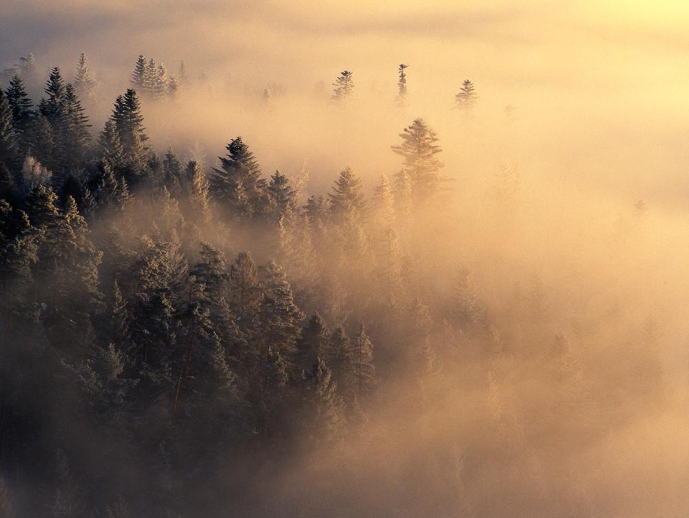 Mist Performance I, Spisska Magura, Slovakia